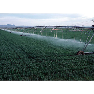 Improper irrigation or undesired irrigation