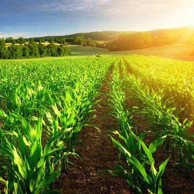 Nitrogen-uptake-in-agriculture
