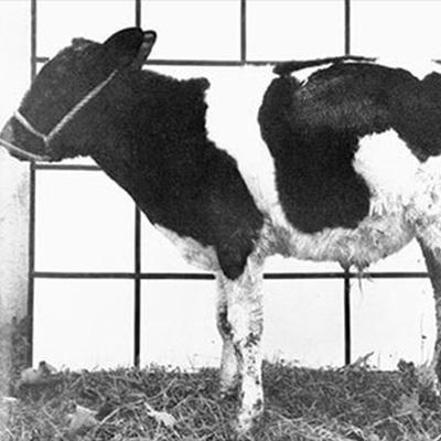 تاریخچه مصرف روی در کشاورزی